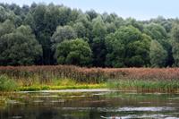 Серебряный бор - памятник природы выставка в Дарвиновском музее