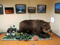 Выставка Земля заповедная