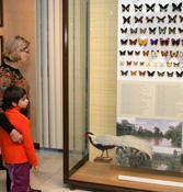 Цветов летучий рой… в Дарвиновском музее