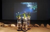 Расширенная рыбья реальность в Музее Мирового океана