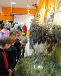 Новая «Кунсткамера»  в Музее природы