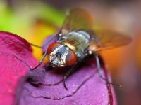 Не просто муха