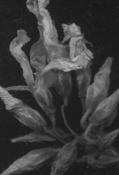 Цветы Паоло Дель Эльче в Выставочном зале Петрозаводска