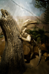 Дарвиновский музей. Вид экспозиции