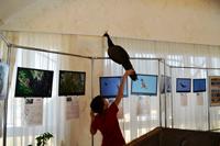 «Птичий базар» в Чувашском национальном музее