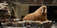 Государственный Дарвиновский музей. Экспозиция