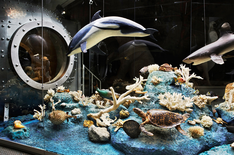 Экспозиции: Май 2014 в Государственном Дарвиновском музее