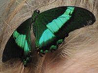 На выставке Живые тропические бабочки в Рыбинском музее