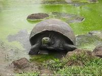 Экспозиции: Черепаха