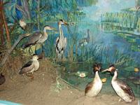 Отдел природы. Диорама Река Терешк
