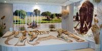 Когда мамонты в Воле купались. Фрагмент выставки
