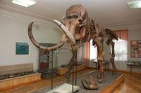 Зал Геологические и палеонтологическое прошлое Пензенского края. Сборный скелет мамонта