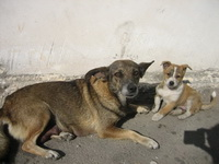 Бездомные собаки