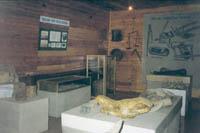Фрагмент экспозиции Первые поселенцы на территории нашего района