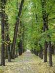 Экспозиции: Ботанический сад МГУ Аптекарский огород