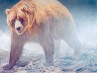 Бурый медведь. 2009.
