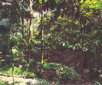 Большая пальмовая оранжерея. Ботанический сад, Петербург