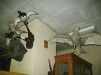 Представители фауны