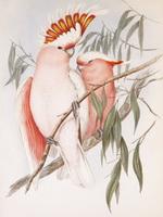 «Птицы  Джона Гульда»