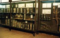 Витрины нижнего экспозиционного зала музея с рептилиями