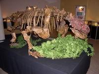 Скутозавр, возраст 245 млн. лет