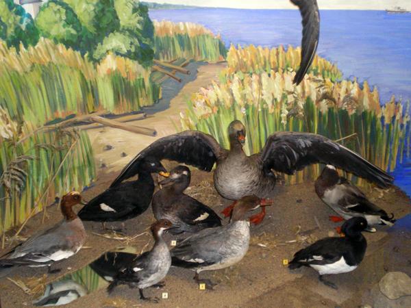 Экспозиции: Экспозиция отдела природа Открытая книга природы