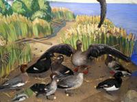 Экспозиция отдела природа Открытая книга природы