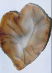 Разбитое сердце Жугана Халцедон. Чукотка. Полированная пластинка.