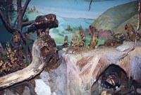 Фрагмент экспозиции Природа и животный мир нашего края