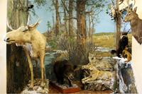 Экспозиция Сибирь в зале природы