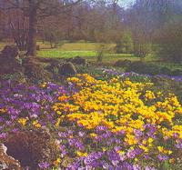 Петербургский Ботанический сад. Весна