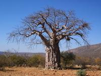 Суккулентная флора Мадагаскара
