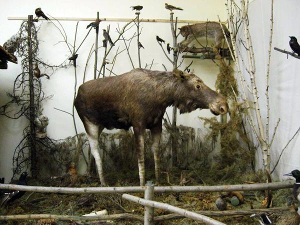 Экспозиции: Уголок природы в экспозиции музея