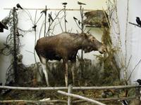 Уголок природы в экспозиции музея