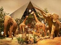Экспозиция Государственного Дарвиновского музея