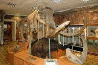 Экспозиция Мамонтовая фауна
