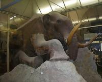В залах Зоологического музея