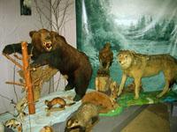 Природа Канской лесостепи. Фрагмент экспозиции