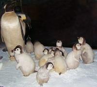 У пингвинов. Музей Арктики и Антарктики