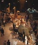 Национальный музей естественной истории Франции