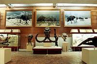 Экспозиции: Зал кайнозоя (млекопитающих)