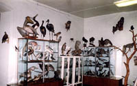 Зал птиц (фрагмент)