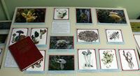 Презентация Красной книги Ненецкого автономного округа