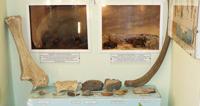 Кости древних животных