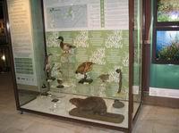 Долина реки Сетунь в Дарвиновском музее
