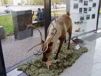 Карельский краеведческий музей принимает участие в выставке-ярмарке Охота и рыбалка - 2005