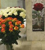 Голландские дизайнеры сделали праздник из голландских роз