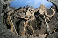 Скелет мамонта. Плейстоцен