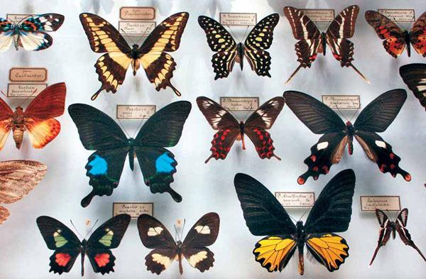 как называется профессия когда ловишь бабочек