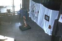 Фрагмент выставки музея Леса Страна чудесных превращений дерева